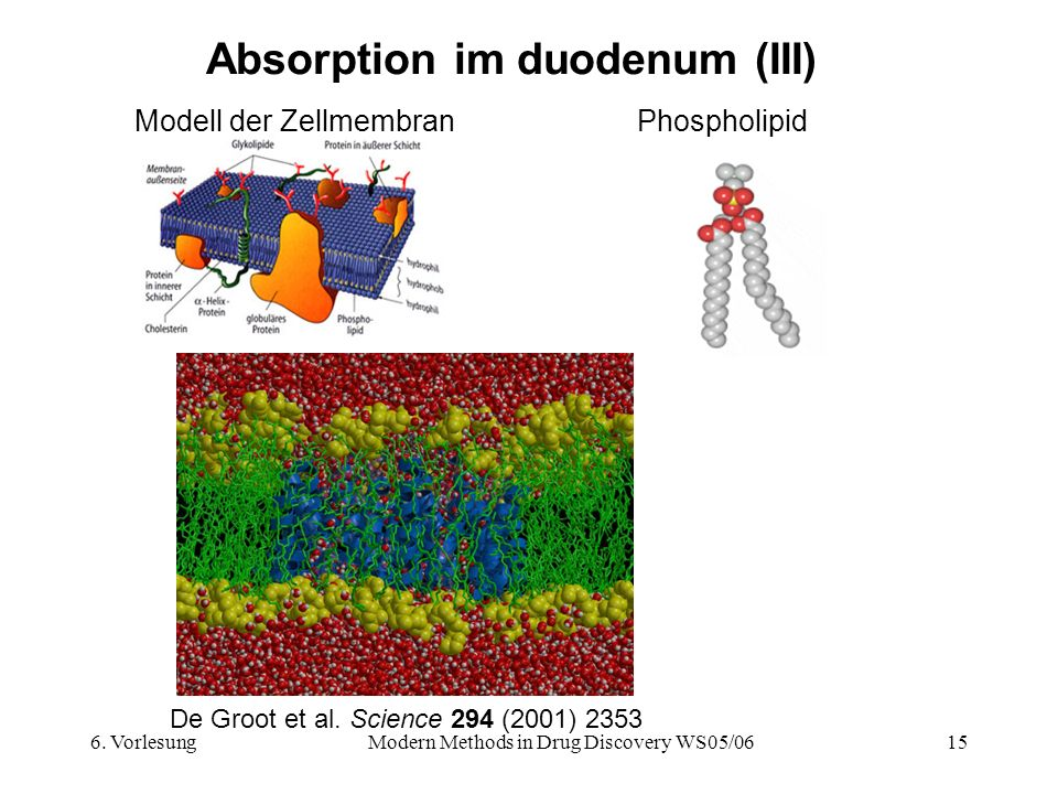 Absorption im duodenum (III)