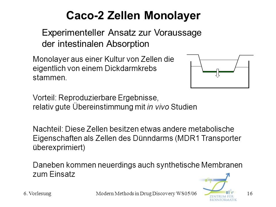 Caco-2 Zellen Monolayer