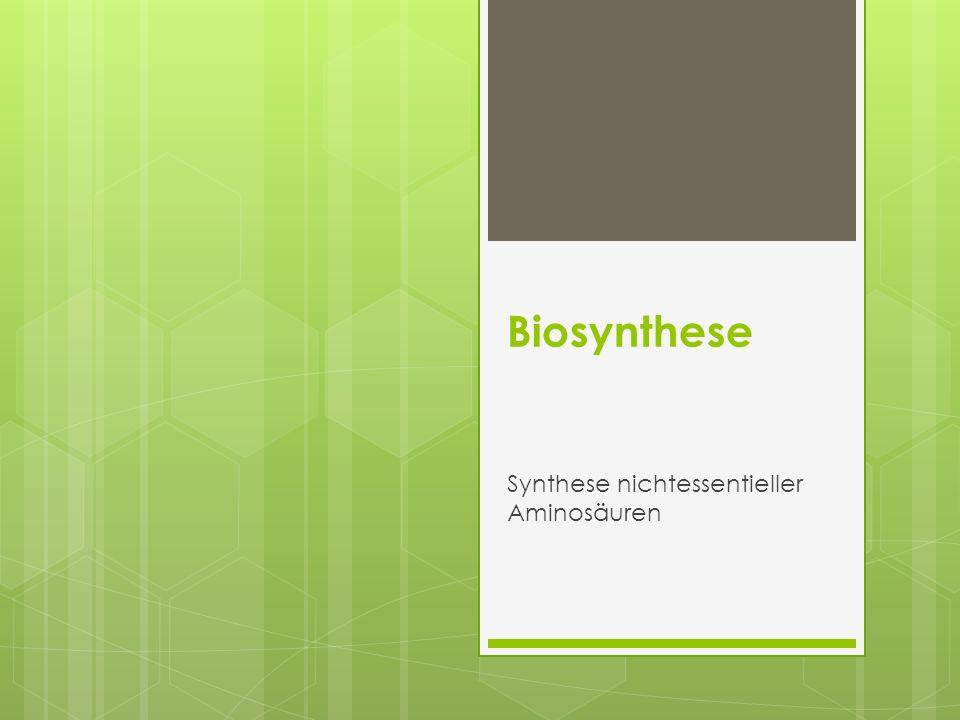 Synthese nichtessentieller Aminosäuren