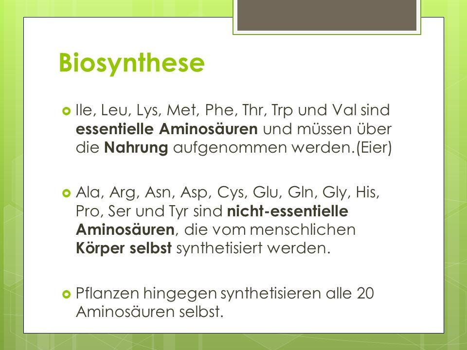 Biosynthese Ile, Leu, Lys, Met, Phe, Thr, Trp und Val sind essentielle Aminosäuren und müssen über die Nahrung aufgenommen werden.(Eier)
