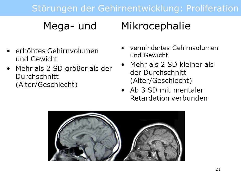 Störungen der Gehirnentwicklung: Proliferation