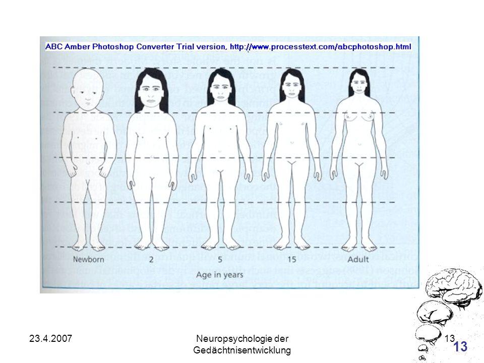 Neuropsychologie der Gedächtnisentwicklung