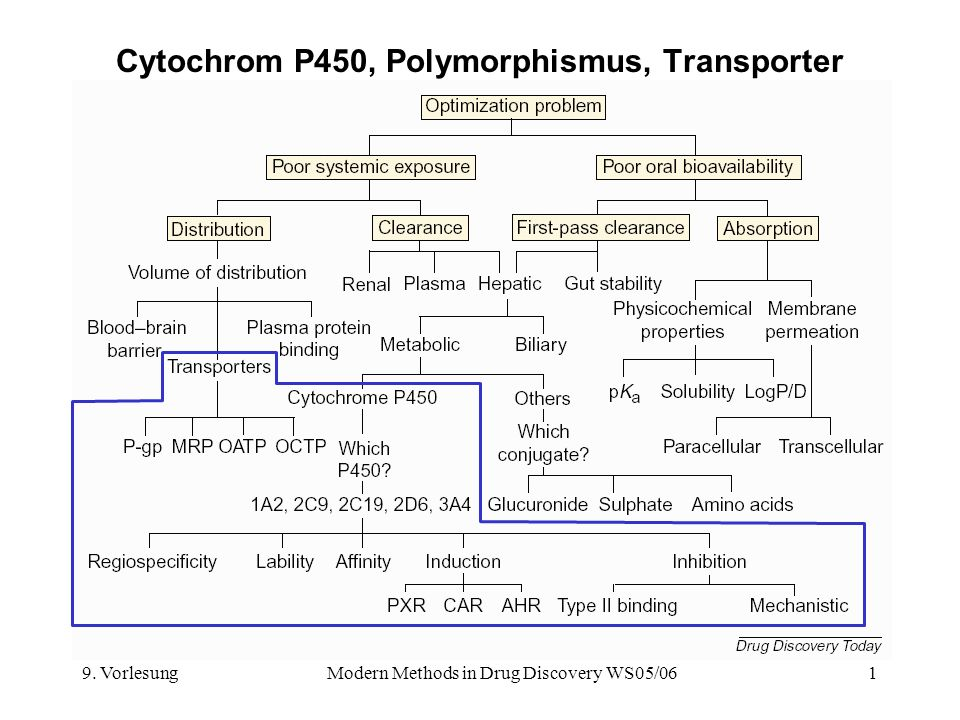 Cytochrom P450, Polymorphismus, Transporter