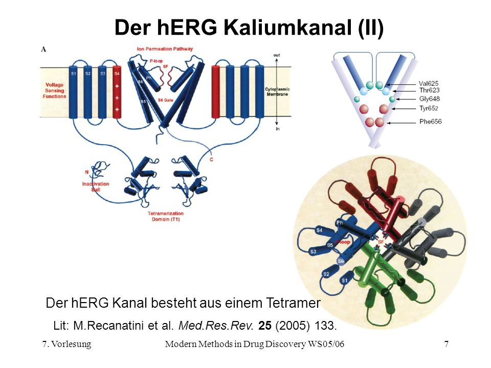 Der hERG Kaliumkanal (II)