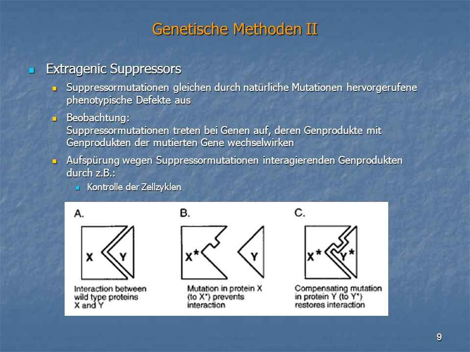 Genetische Methoden II