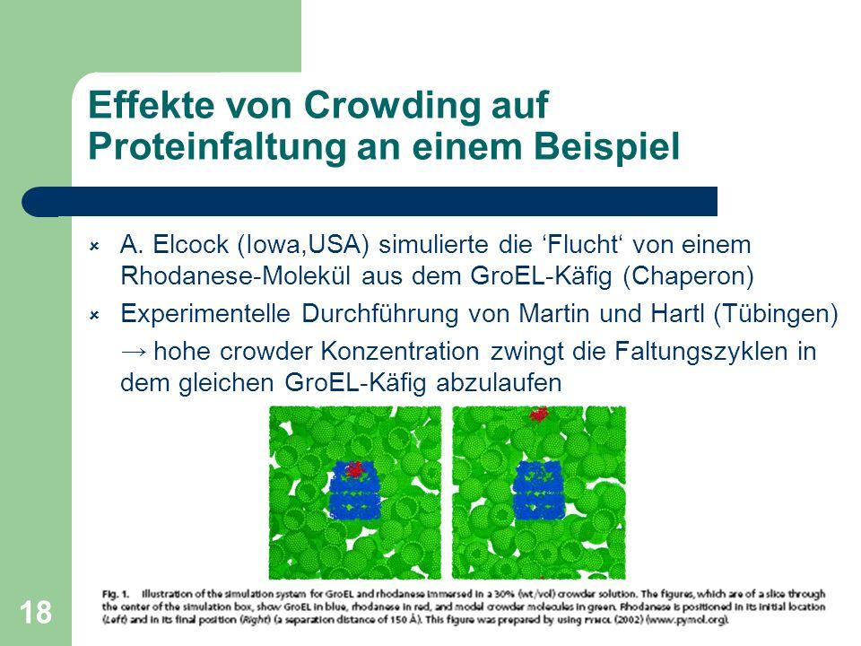 Effekte von Crowding auf Proteinfaltung an einem Beispiel