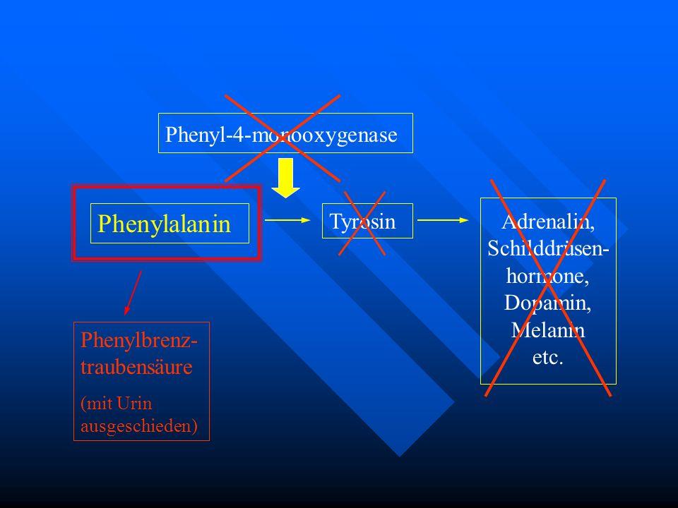 Phenylalanin Phenyl-4-monooxygenase Tyrosin Adrenalin, Schilddrüsen-