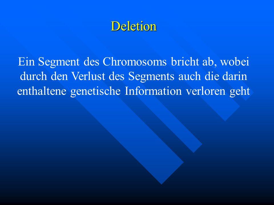 Deletion Ein Segment des Chromosoms bricht ab, wobei durch den Verlust des Segments auch die darin enthaltene genetische Information verloren geht.