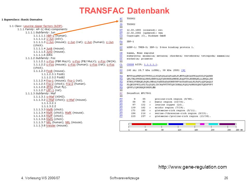 TRANSFAC Datenbank http://www.gene-regulation.com