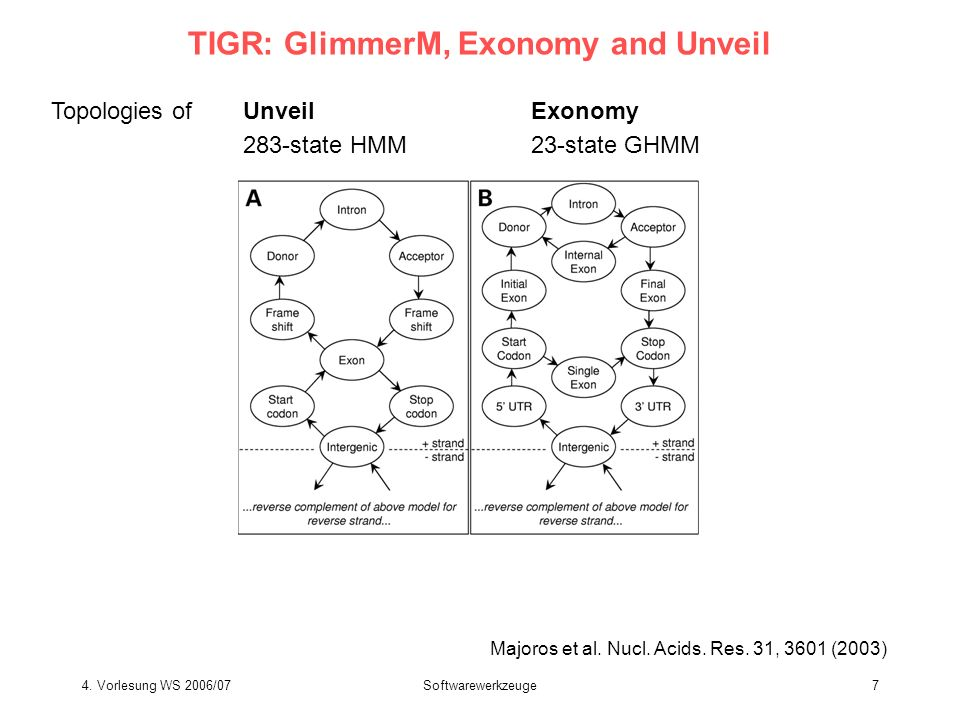 TIGR: GlimmerM, Exonomy and Unveil