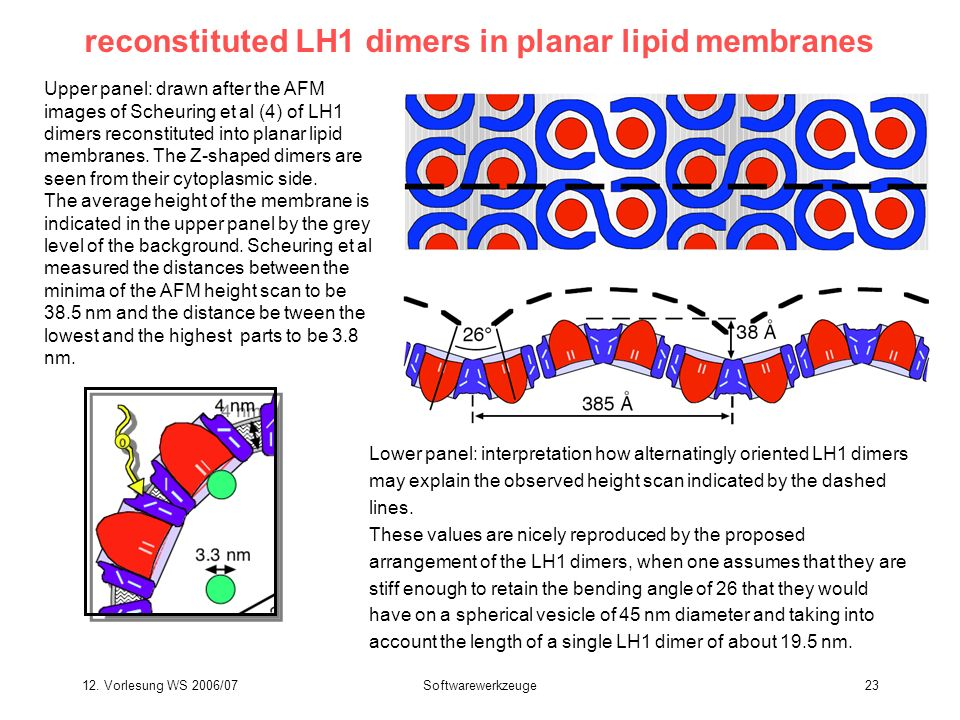 reconstituted LH1 dimers in planar lipid membranes