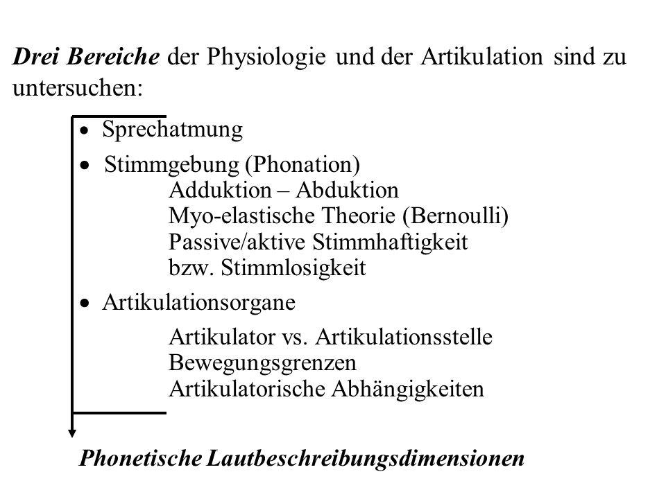 Drei Bereiche der Physiologie und der Artikulation sind zu untersuchen: