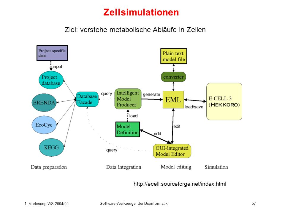 Zellsimulationen Ziel: verstehe metabolische Abläufe in Zellen