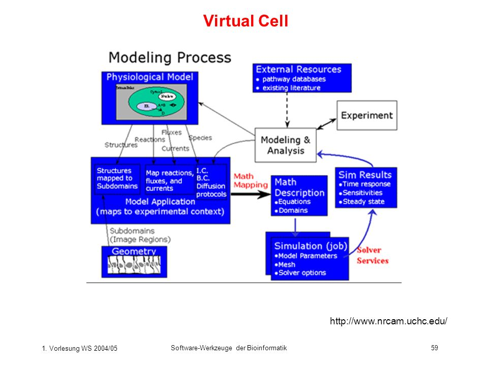 Virtual Cell http://www.nrcam.uchc.edu/