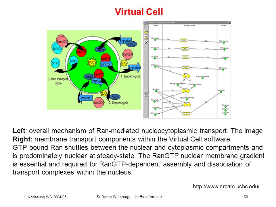 Virtual Cell Left: overall mechanism of Ran-mediated nucleocytoplasmic transport. The image.