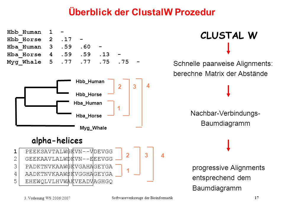 Überblick der ClustalW Prozedur