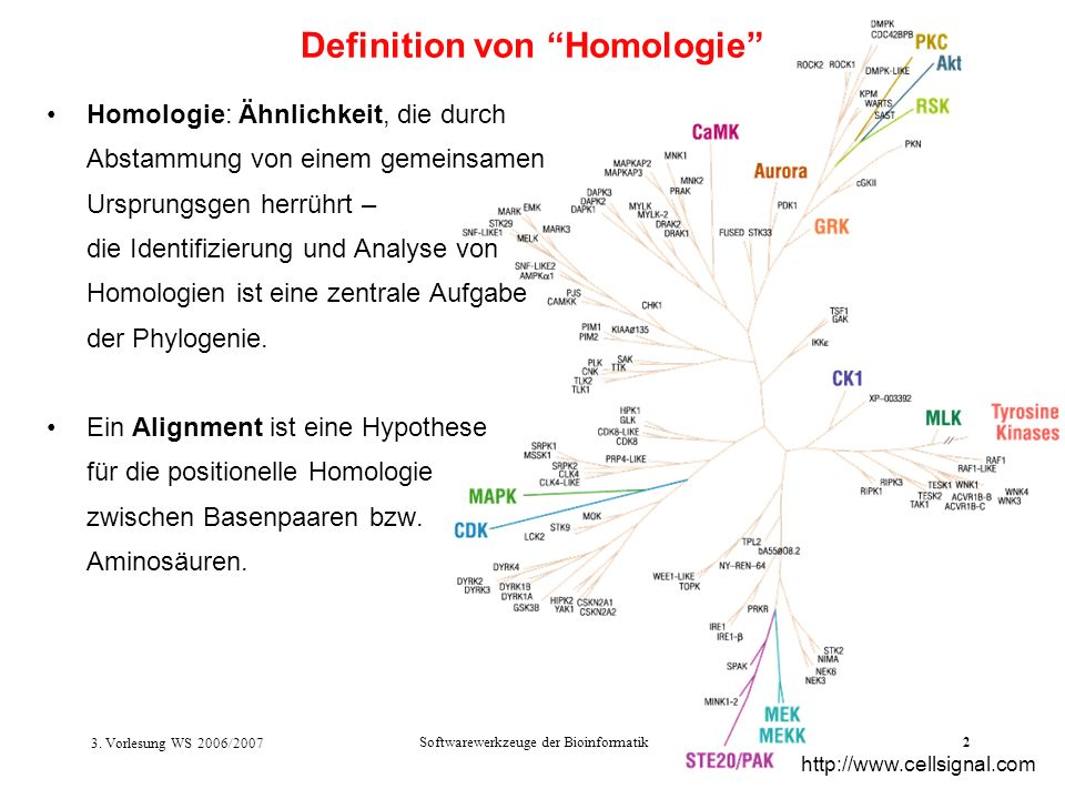 Definition von Homologie