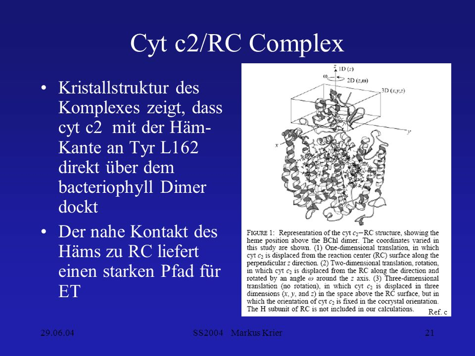Cyt c2/RC Complex Kristallstruktur des Komplexes zeigt, dass cyt c2 mit der Häm-Kante an Tyr L162 direkt über dem bacteriophyll Dimer dockt.