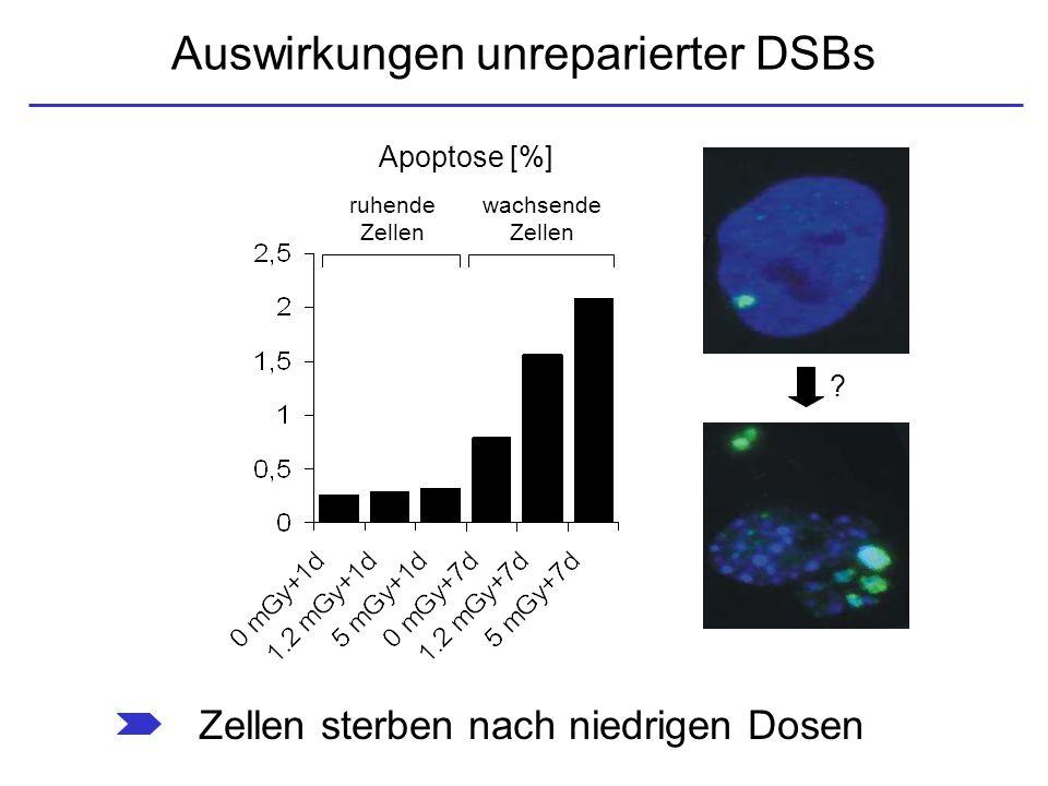 Auswirkungen unreparierter DSBs