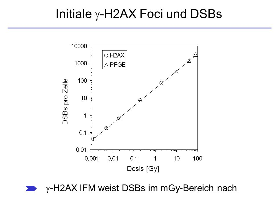 Initiale -H2AX Foci und DSBs
