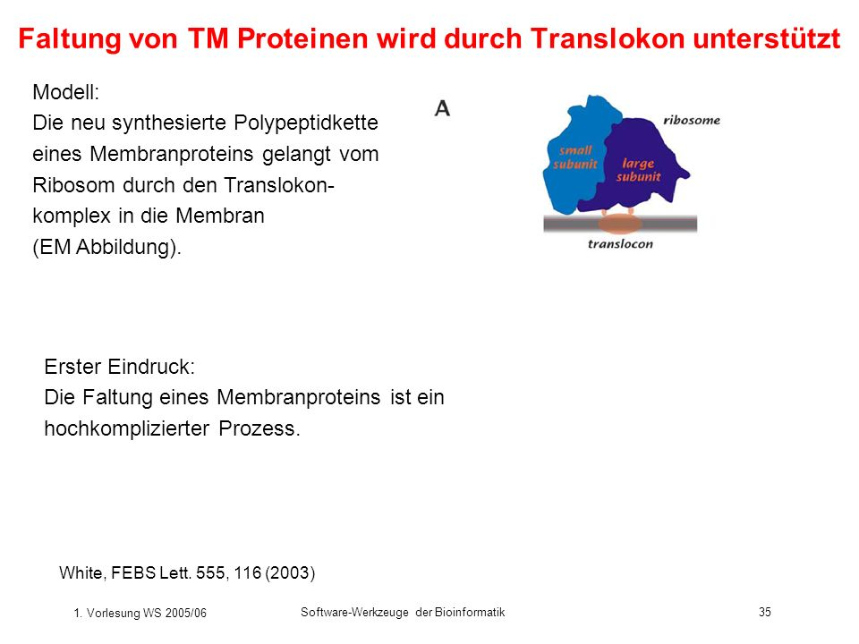 Faltung von TM Proteinen wird durch Translokon unterstützt