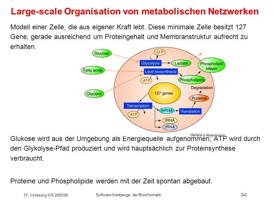 Large-scale Organisation von metabolischen Netzwerken