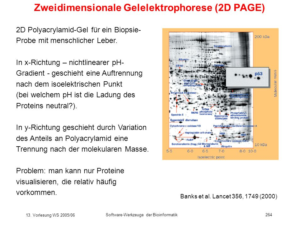 Zweidimensionale Gelelektrophorese (2D PAGE)