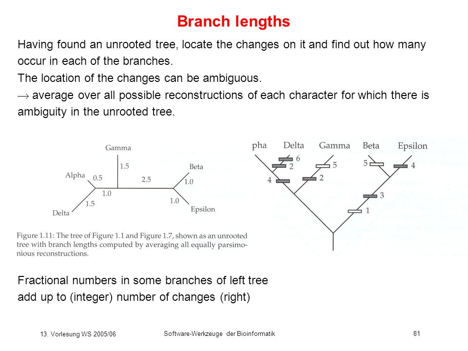 Branch lengths Having found an unrooted tree, locate the changes on it and find out how many occur in each of the branches.