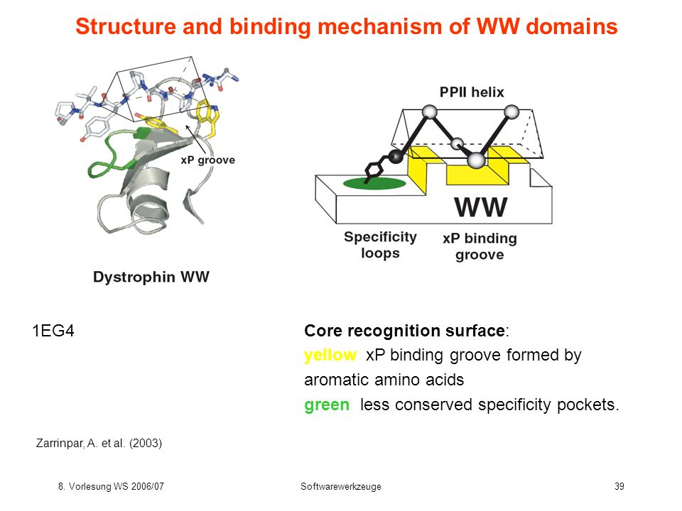 Structure and binding mechanism of WW domains