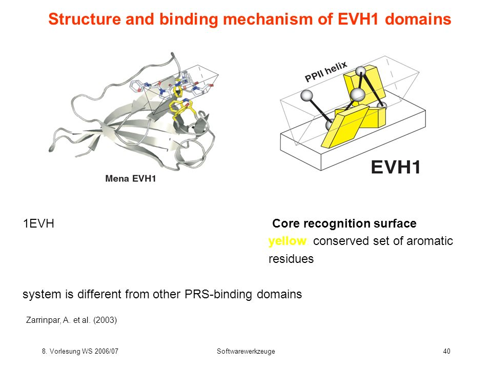 Structure and binding mechanism of EVH1 domains