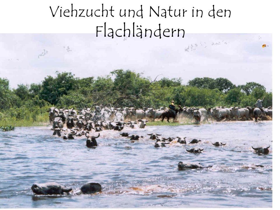 Viehzucht und Natur in den Flachländern