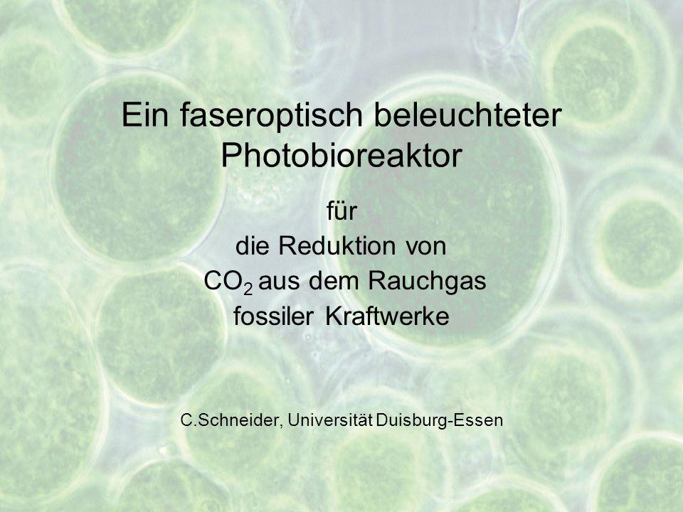 Ein faseroptisch beleuchteter Photobioreaktor