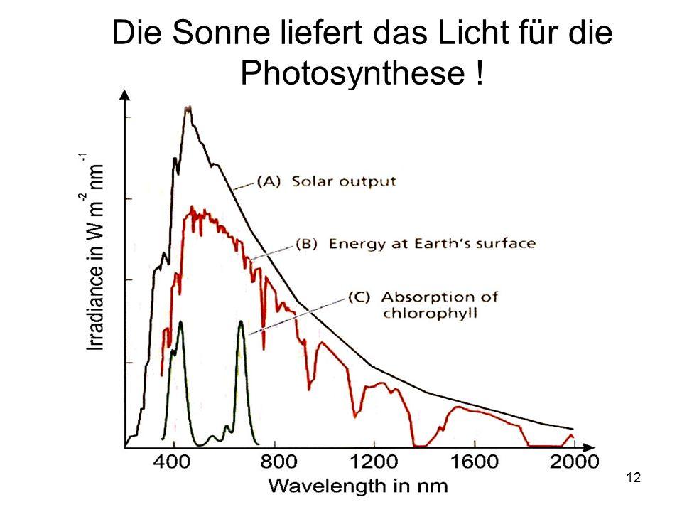 Die Sonne liefert das Licht für die Photosynthese !