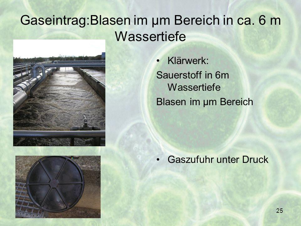 Gaseintrag:Blasen im µm Bereich in ca. 6 m Wassertiefe