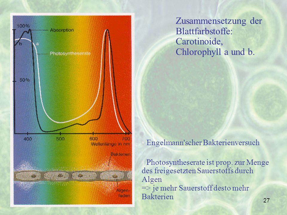 Zusammensetzung der Blattfarbstoffe: Carotinoide, Chlorophyll a und b.