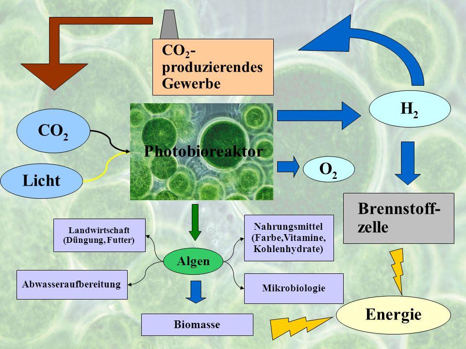 H2 CO2 Photobioreaktor O2 Licht Brennstoff-zelle Energie