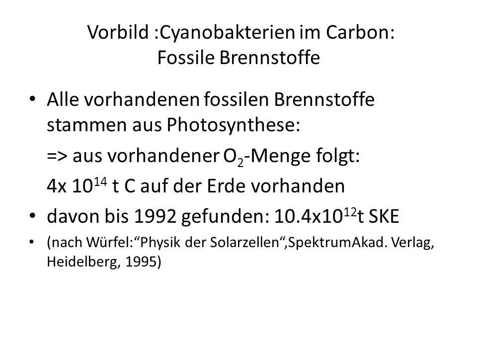 Vorbild :Cyanobakterien im Carbon: Fossile Brennstoffe