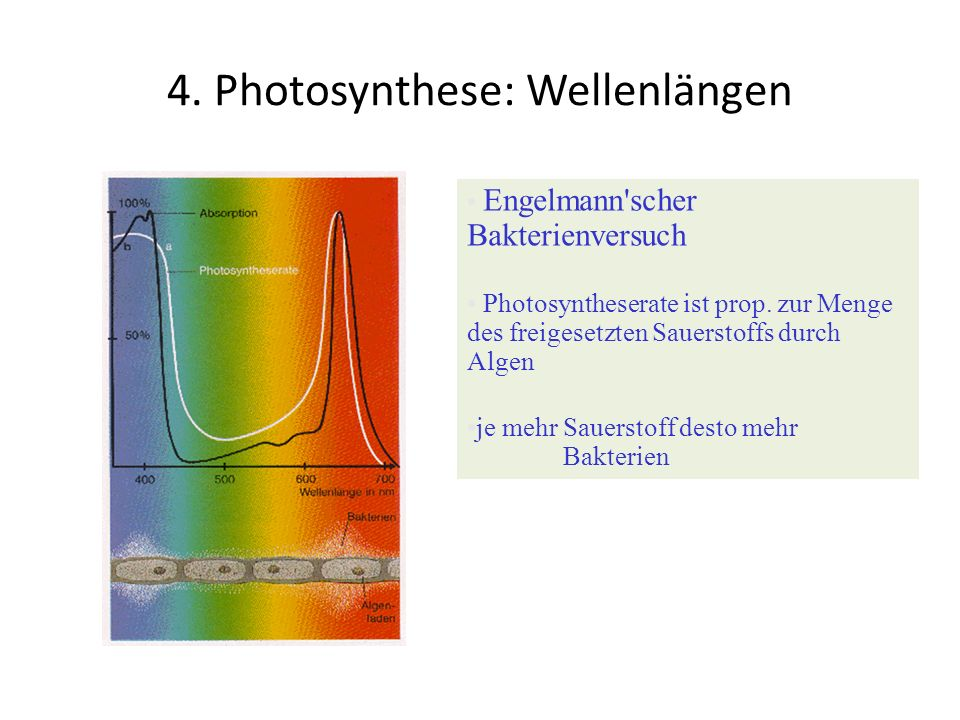 4. Photosynthese: Wellenlängen