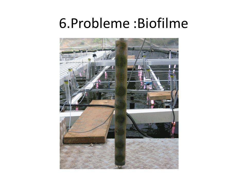 6.Probleme :Biofilme