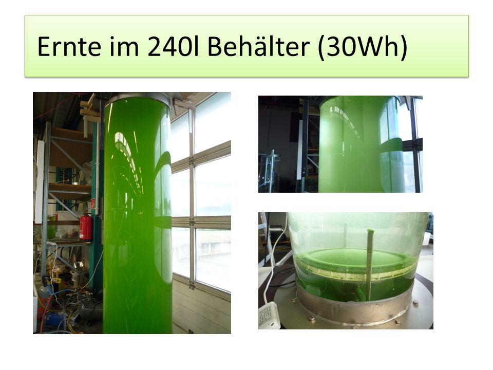 Ernte im 240l Behälter (30Wh)