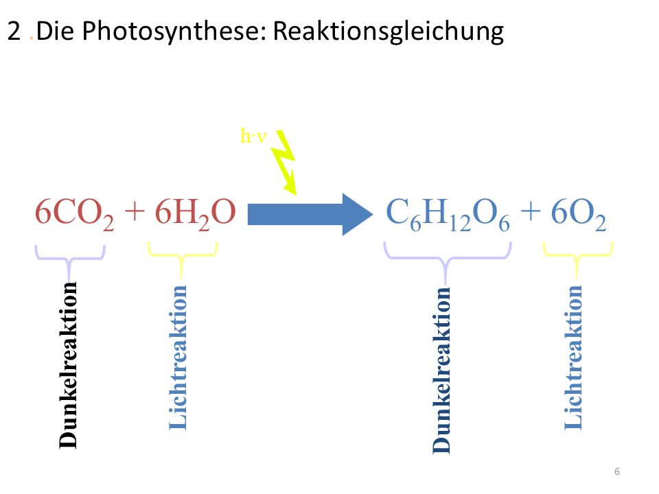 2 .Die Photosynthese: Reaktionsgleichung