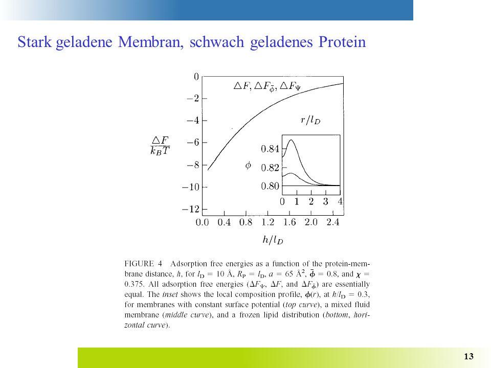 Stark geladene Membran, schwach geladenes Protein
