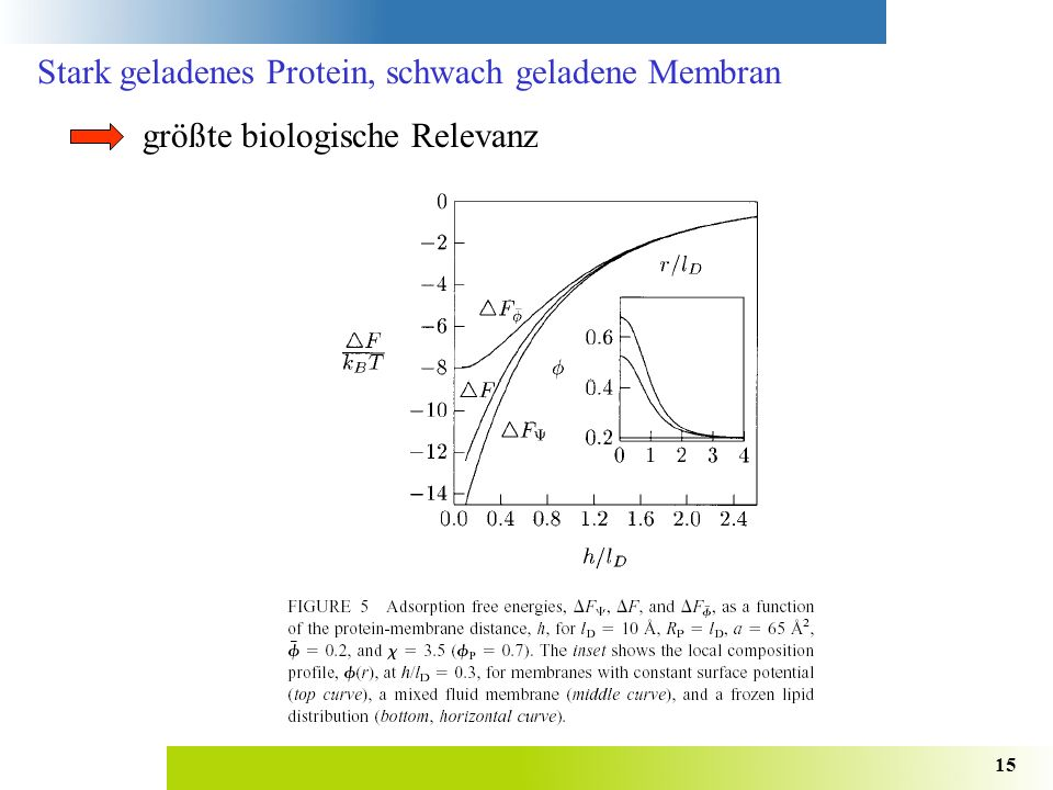 Stark geladenes Protein, schwach geladene Membran