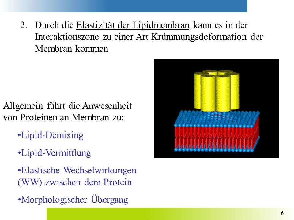 2. Durch die Elastizität der Lipidmembran kann es in der Interaktionszone zu einer Art Krümmungsdeformation der Membran kommen
