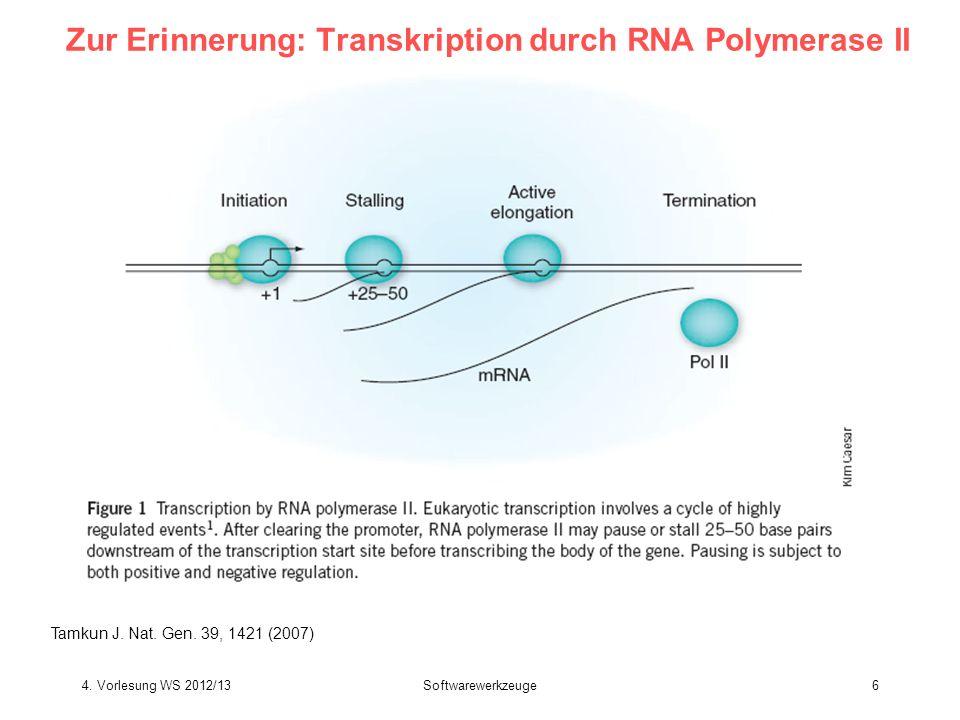 Zur Erinnerung: Transkription durch RNA Polymerase II