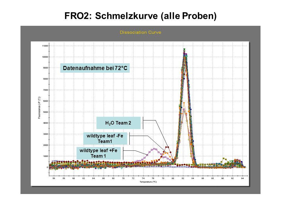 FRO2: Schmelzkurve (alle Proben)