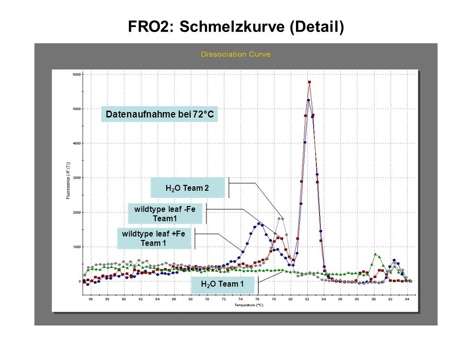 FRO2: Schmelzkurve (Detail)