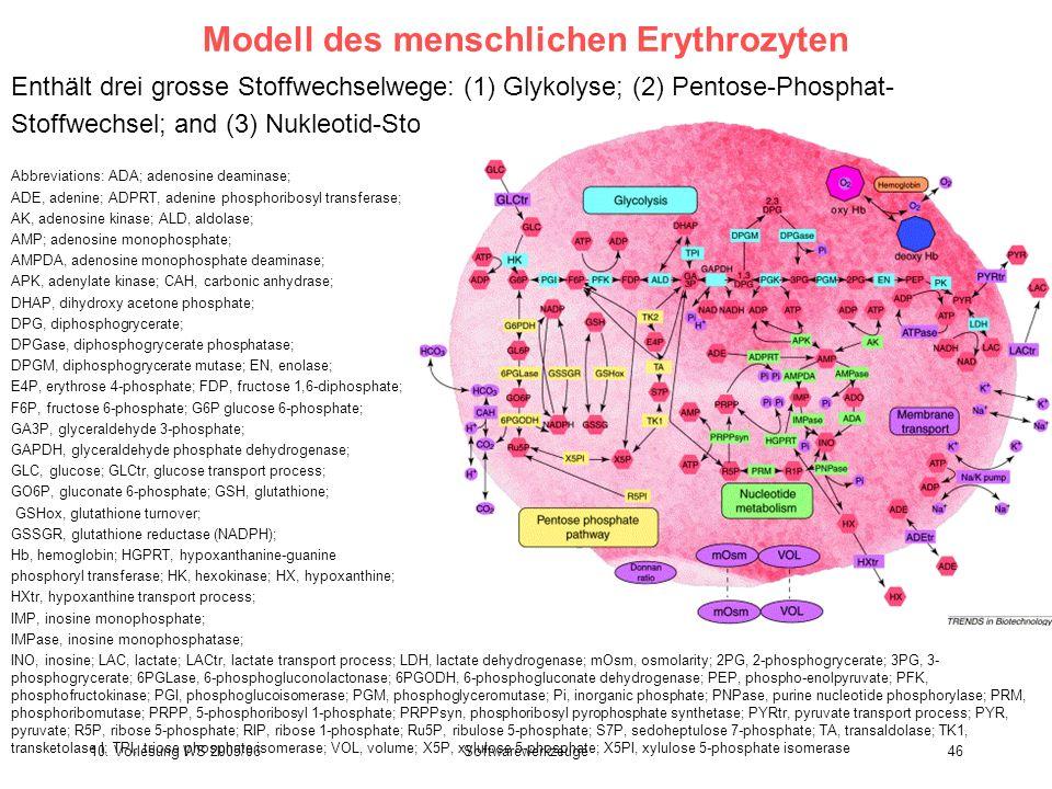 Modell des menschlichen Erythrozyten