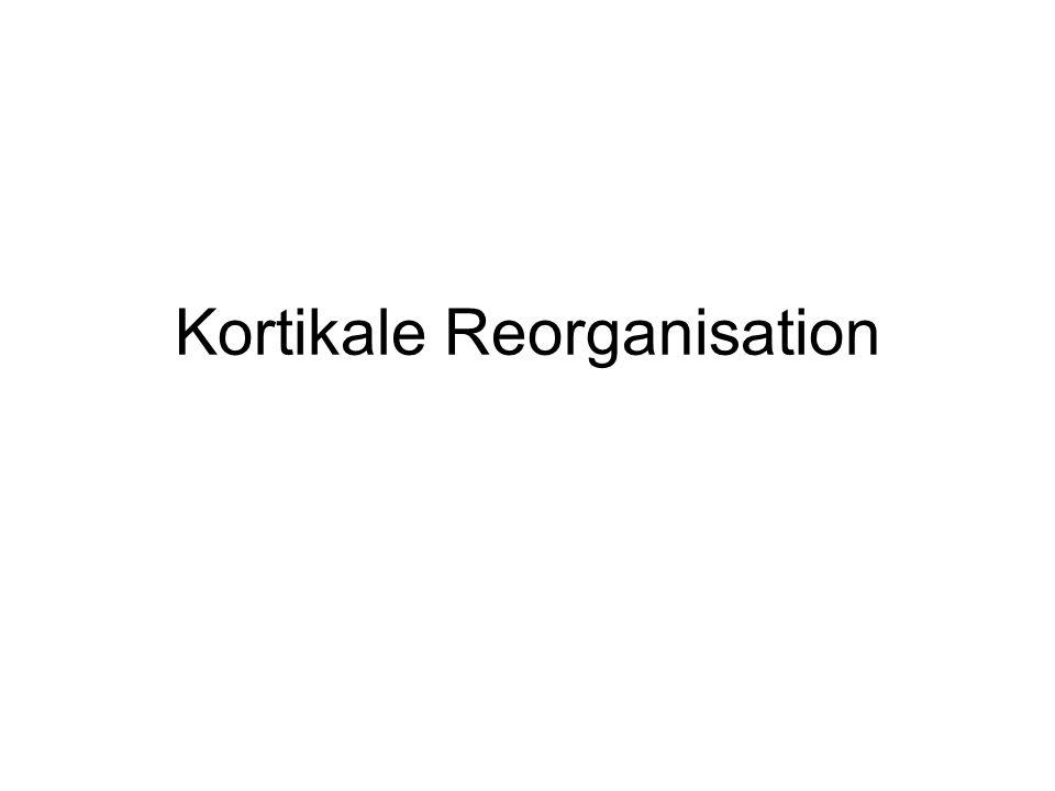 Kortikale Reorganisation