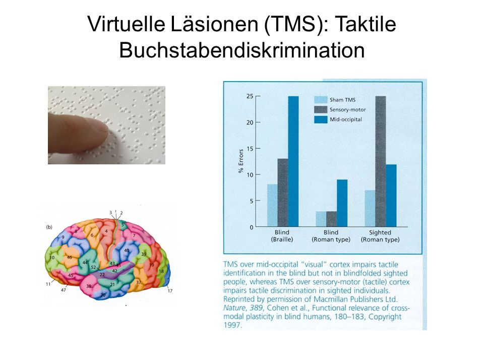 Virtuelle Läsionen (TMS): Taktile Buchstabendiskrimination